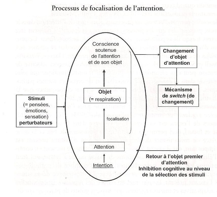Schèma du processus de focalisation de l'attention